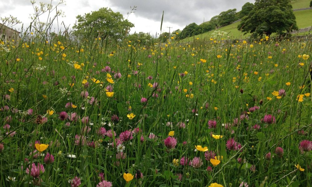 Flower Meadow - Arncliffe